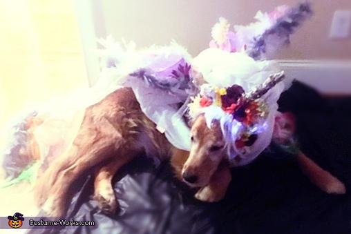 Unicorn Dog Homemade Costume