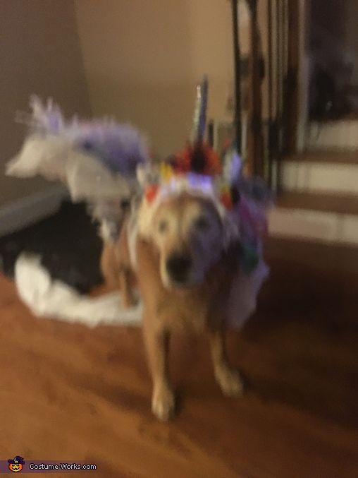 Unicorn Dog Homemade Costume