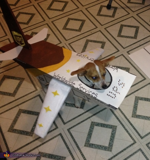 UPS Airplane Dog Costume