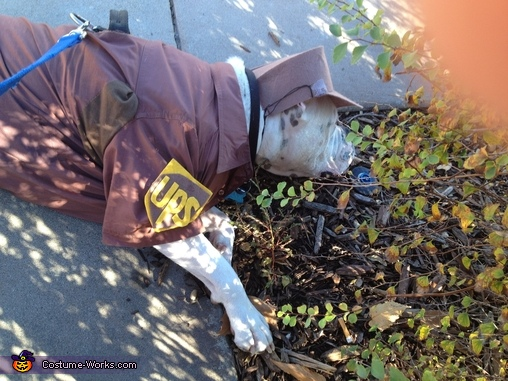 Break time!!, UPS Delivery Man Dog Costume