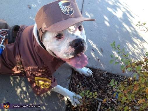 ready to get back to work !!, UPS Delivery Man Dog Costume