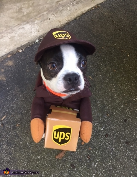 Walter the UPS Dog, UPS Dog Costume