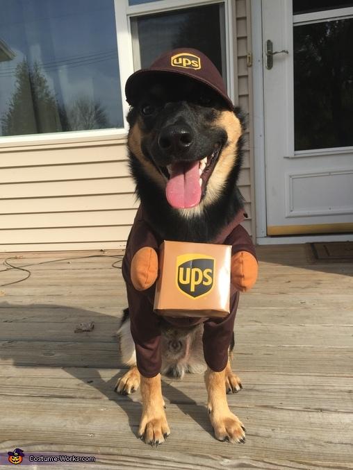 UPS Worker Dog Costume