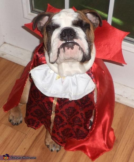 VamBULLYpire Vampire Bulldog Costume