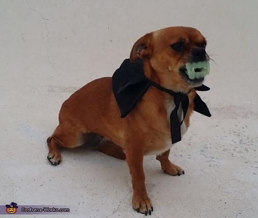 Vampire Pug Costume