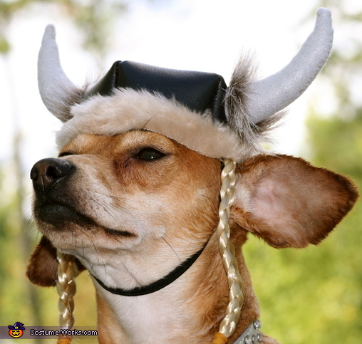 Viking Dog Costume