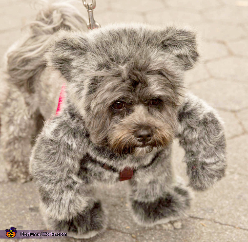 Bugsy the walking teddy bear - out for a walk, Walking Teddy Bear Costume