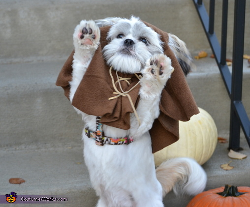 Ewok Costume For Dogs No Sew Diy Costumes