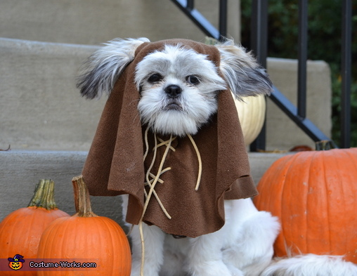WallE the Shi-Wok, Ewok Costume