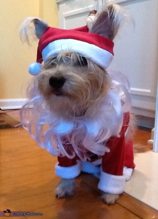 Walter as Santa, Pirate and Santa Costume