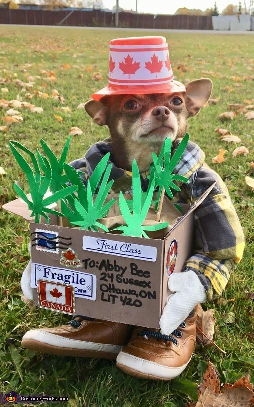 Weed Dog Costume