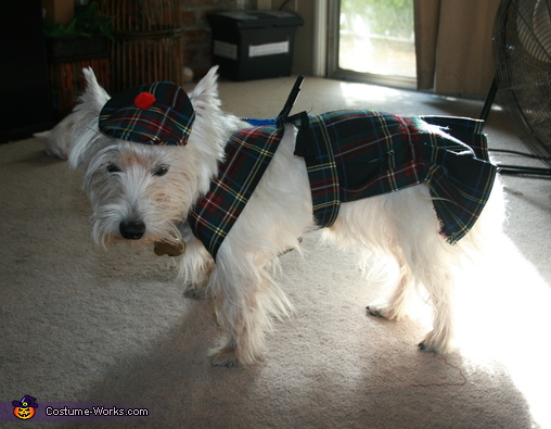 West Highland Games Costume for Dogs
