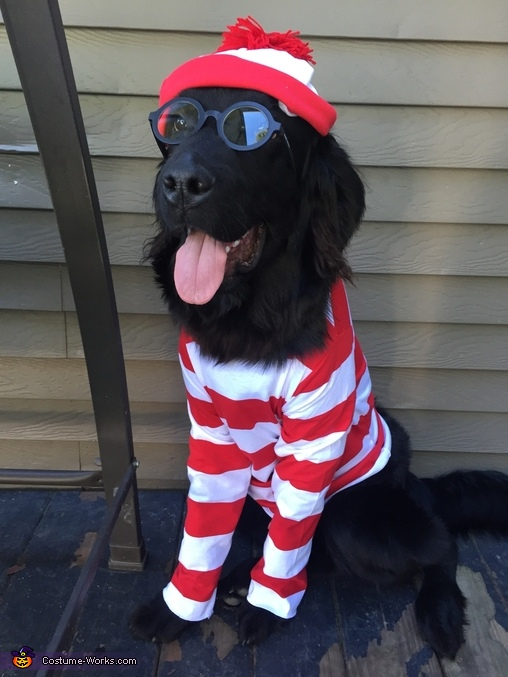 Where's Waldo? Dog's Costume