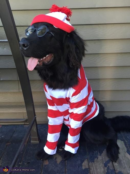 Where's Waldo? Dog's Costume