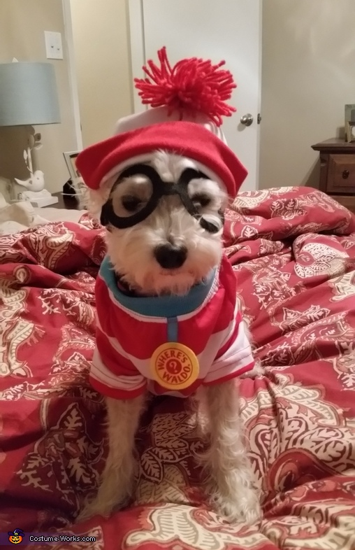 Where's Waldo Dog's Costume