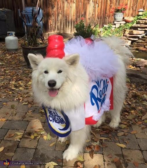 Whipped Cream Dog Costume