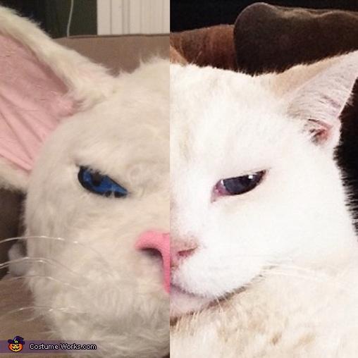 Whitey Cat Homemade Costume