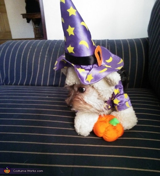 bella, Witch Dog Costume