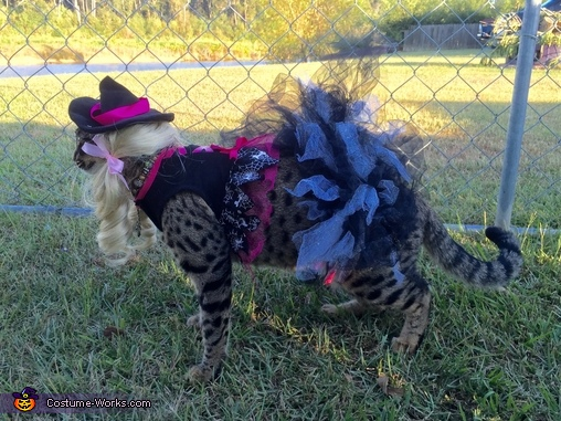 Witch Cat Homemade Costume
