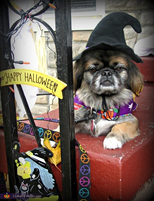 Happy Halloween from Molly, Witches of the Bronx Costume
