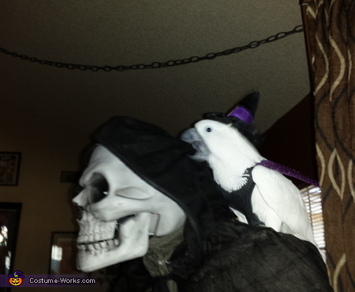 Bandit, Witch's Bat Costume