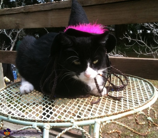 Witchy Kitty Costume