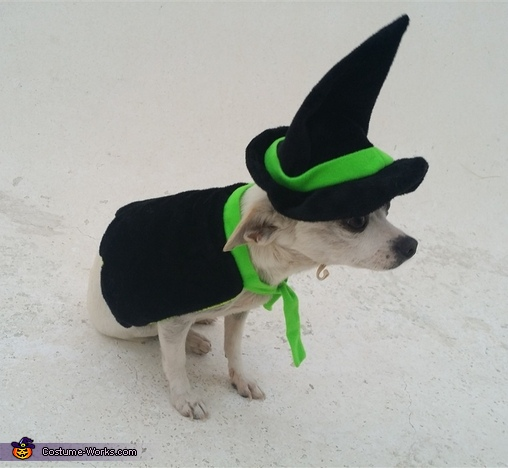 Witchy Pup Costume