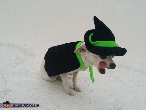Witchy Pup Homemade Costume