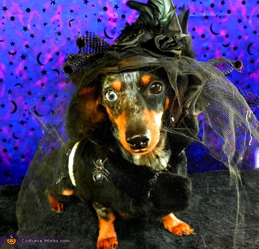 Witchy Ween, Leah!,  Costume