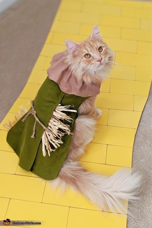 Scarecrow, Wizard of Oz Costume