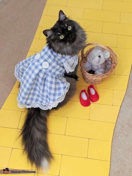 Dorothy, Wizard of Oz Costume