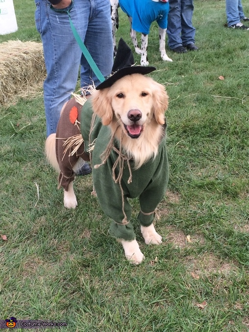 Wizard of Oz Scarecrow Dog Homemade Costume