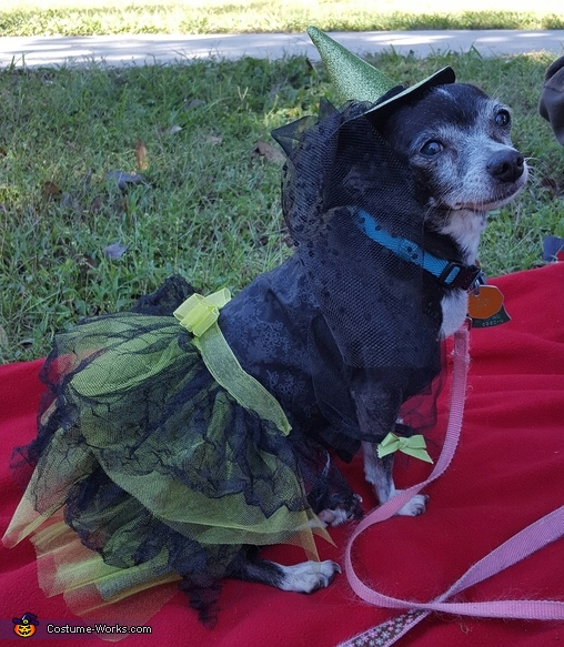 Tina as the Wicked Witch of the West, Wizard of Oz Witches Costume