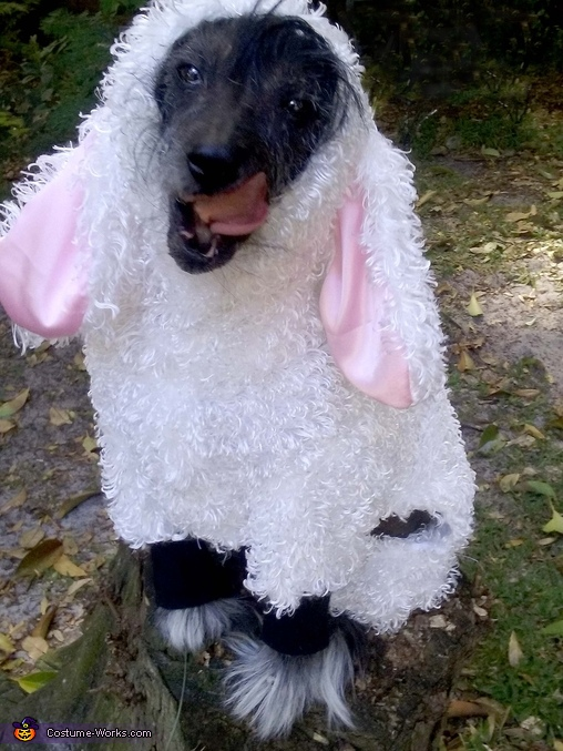 Wolf in Sheep's Clothing Costume