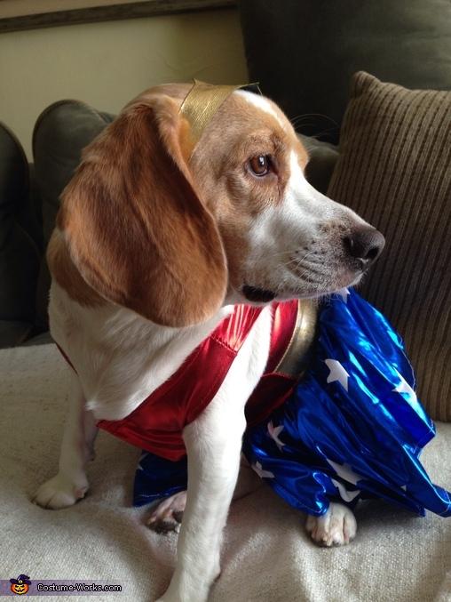 Wonder Woman Dog Costume