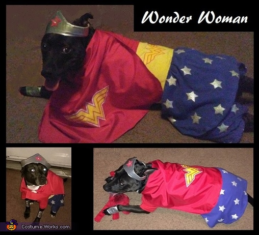 Wonder Woman Dogs Costume