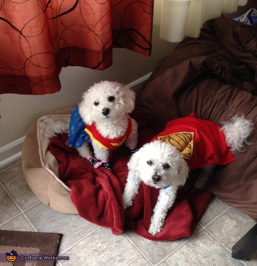 Wonder Women and Superman Dog Costume