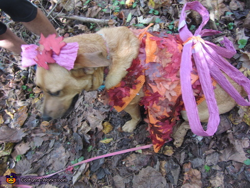 Woodland Fairy Dog , Woodland Fairy Dog Costume