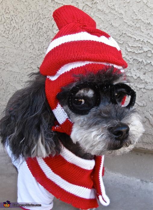 I look ridiculous, Where's Waldo Dog Costume