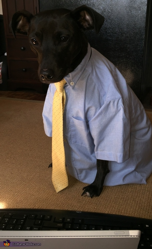Working Dog Homemade Costume