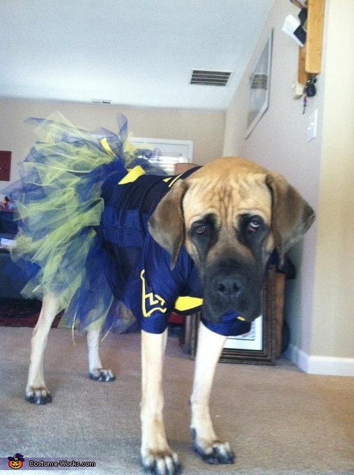 WVU Cheerleader - Homemade costumes for pets