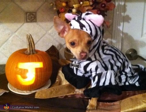 Zebra Chihuahua Costume