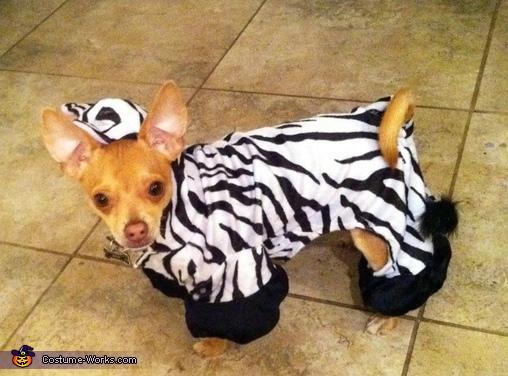 Zebra Costume for Dogs