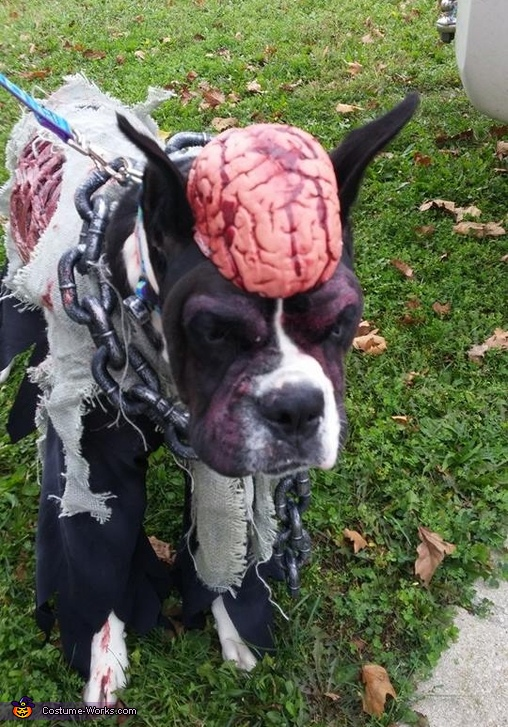 Zombie Dog Homemade Costume