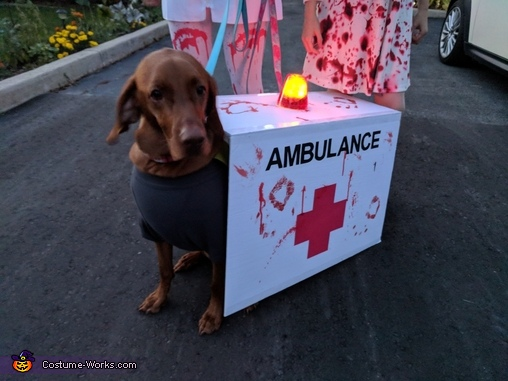 Dog Roxie as a Zombie Ambulance, Zombie Nurse Apocalypse Costume