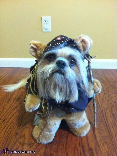 Creative DIY costumes for dogs - Ewok Dogs Costume