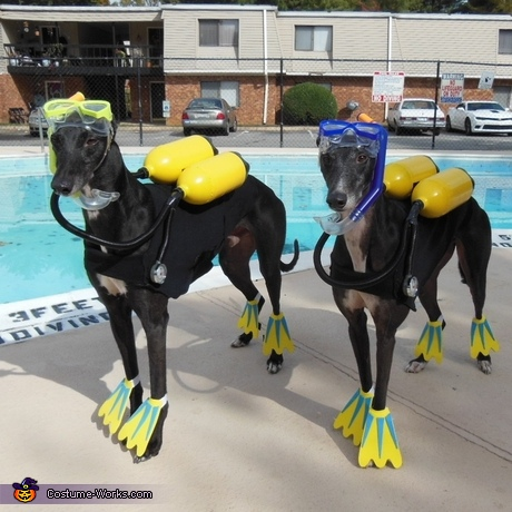 100 creative diy costume ideas for dogs creative diy dogs costumes scuba dogs costume solutioingenieria Choice Image