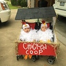 Photo #2 - 2 Chicks in a Coop
