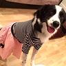 Photo #2 - 50's Pup