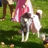 Photo #3 - 50's Pup